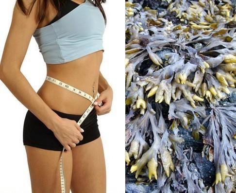 alga bruna,alga bruna,alga bruna diete dimagranti,alga bruna stanchezza,alga marina,benessere,cellulite,dimagrire con l'alga bruna,medicina naturale,piante medicali,rimedi naturali,salute